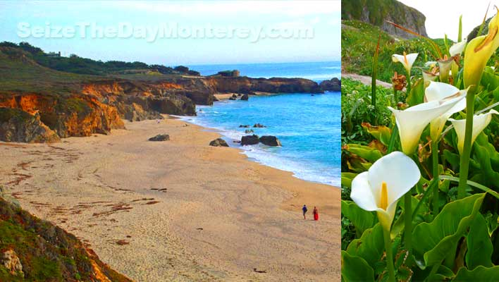 One of the best Big Sur Beaches for walking is Garrapata Beach