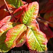 Watch Out for Poison Oak.  Remember, Leaves of Three let it be!