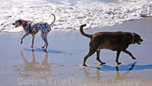 Much of the Big Sur Lodging simply do not allow pets but there are a few that do.