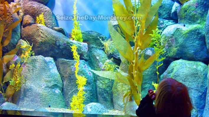 Kids of all ages love the Monterey Bay Aquarium.  Free Monterey Bay Aquarium Tickets are available!  Do not miss it while visiting Monterey California!