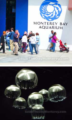Free Monterey Bay Aquarium Tickets From The County Library