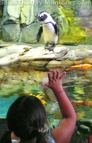 Don't miss the Penguin exhibit, it is just too much fun for the kids and even adults!  Free Monterey Bay Aquarium Tickets can be had!