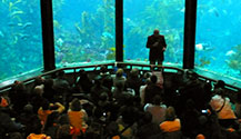 The Feeding Sessions are really really cool at the Monterey Bay Aquarium.  Get there early though to get a good seat.