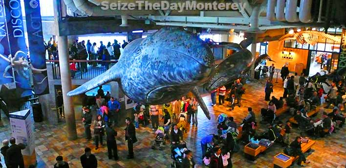 The Monterey Aquarium is one of the best Aquariums in the World for a reason!
