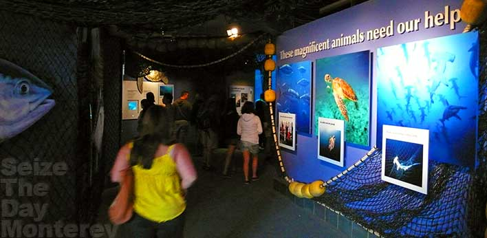 The Monterey Aquarium has a tremendous conservation program which includes educating its patrons.