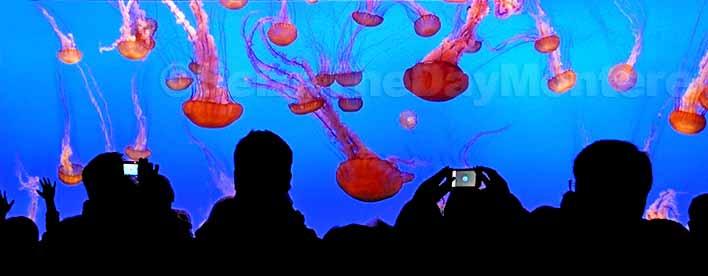 Monterey Bay Aquarium in Monterey CA