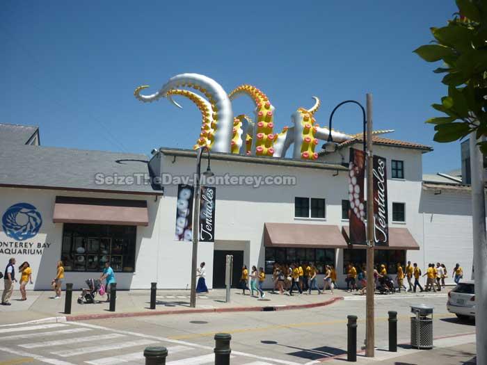 Monterey Aquarium Tentacle Exhibit
