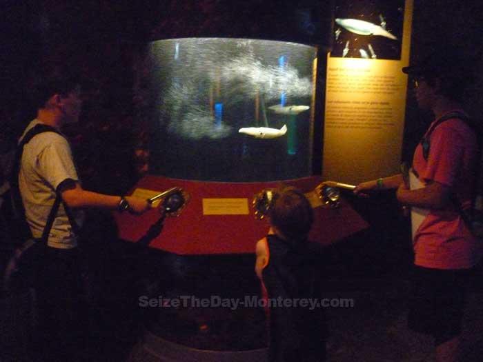 Monterey Aquarium Tentacles Display