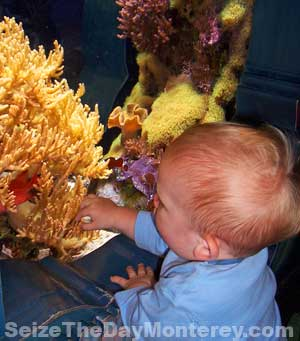 Children Under 3 Years of Age get Free Admission into the Monterey Aquarium