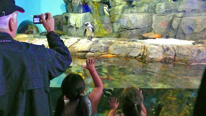 Don't miss the Penguin Exhibit! These Monterey Aquarium Tips will ensure that you have the best possible visit!
