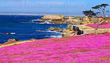 Walk the recreational trail after the Monterey Aquarium, it's just a block away!