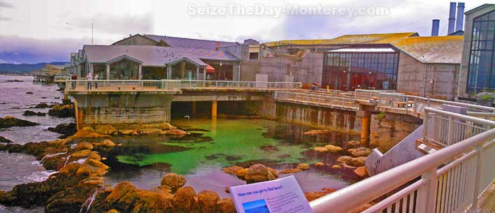 The Monterey Aquarium sits right on the water on the Monterey Bay.  Some of the best views of the bay can be had on the Monterey Aquarium Deck!