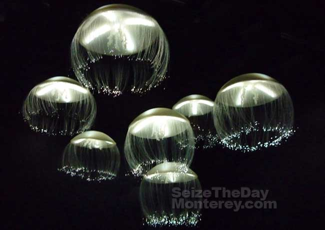 A Monterey Bay Aquarium Coupon will save you money while you're enjoying the Jellyfish Exhibit!