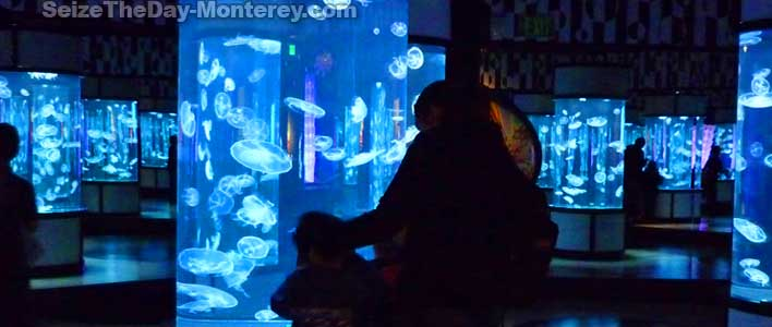 A Monterey Bay Aquarium Coupon can save you money!  Do not miss the new Jellyfish Exhibit at the Monterey Aquarium!