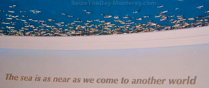 photograph about Monterey Bay Aquarium Printable Coupon named Monterey bay aquarium coupon code 2018 - Printable