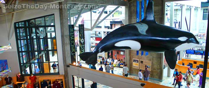 Monterey Aquarium has a number of true life scale animals on display such as this Orca