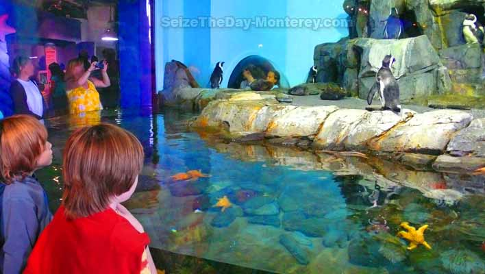 A Monterey Bay Aquarium Discount can be had with these tips!  Save money!  The Penguin Exhibit is great fun!