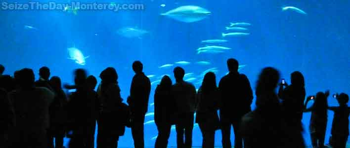 Free Monterey Bay Aquarium Tickets are available at the Library, but hurry, they go fast!