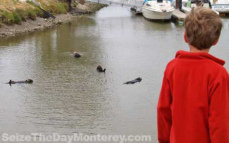 Monterey Sea Otters are easy to spot at their secret hangout!