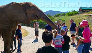 Wild Things Animal Park is fun for the kids, especially feeding the elephants!