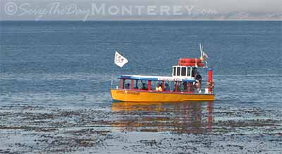 The Monterey Harbor Cruise is a relaxed 30 minute cruise around the Harbor.  Lots of fun for the younger ones.