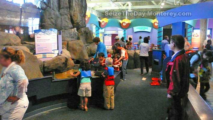 Kids of all ages love the Monterey Bay Aquarium.  There is a lot of Monterey kids fun to be had at the aquarium!