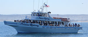 Monterey Whale Watching is a lot of fun expecially for kids!