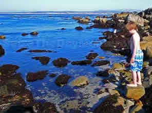 Tidepooling in Monterey at Pacific Grove Lover's Point Beach is great fun and Free!