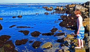 Tidepooling in Monterey is an amazing thing to do with your kids so join them!