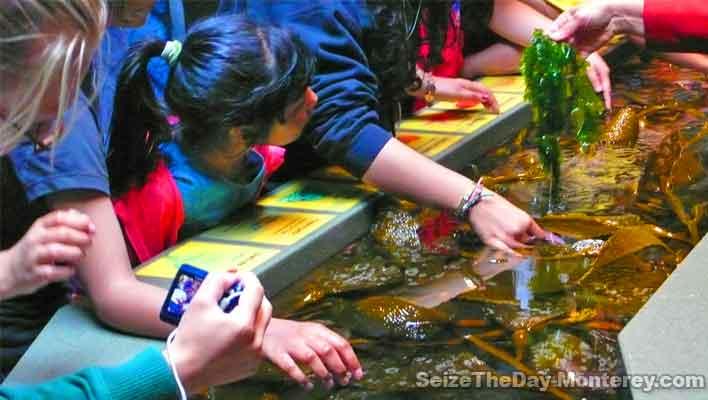 Purchase Your Monterey Bay Aquarium Tickets